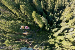 View of tree tops out of helicopter with rappellers decending