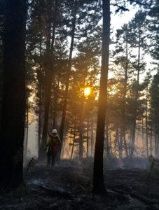 Sun through the trees with smoke