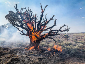 Tree with bare limbs on fire