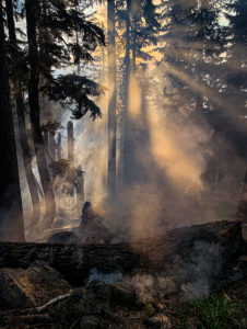 Sun streaming through forest highlighted by smoke