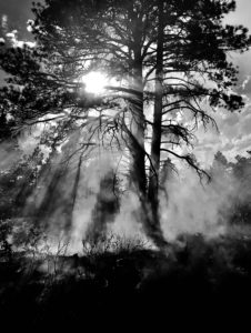 Black and white image of sun streaming through forest trees with smoke