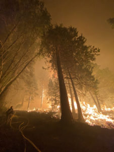 Forest fully engulfed in flames