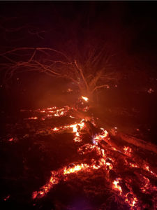 Tree roots burning in soil, red against black background