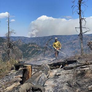 Wildland firefighter cutting smoking, smoldering downed tree