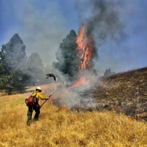 Wildland firefighter torching a field